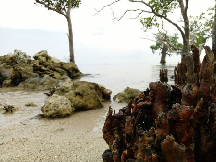 Mangrove Roots Growing Roots Beach Sea No People Water Tranquility Outdoors Day Scenics Beauty In Nature Landscape Nature Travel Destinations Cloud - Sky Sky