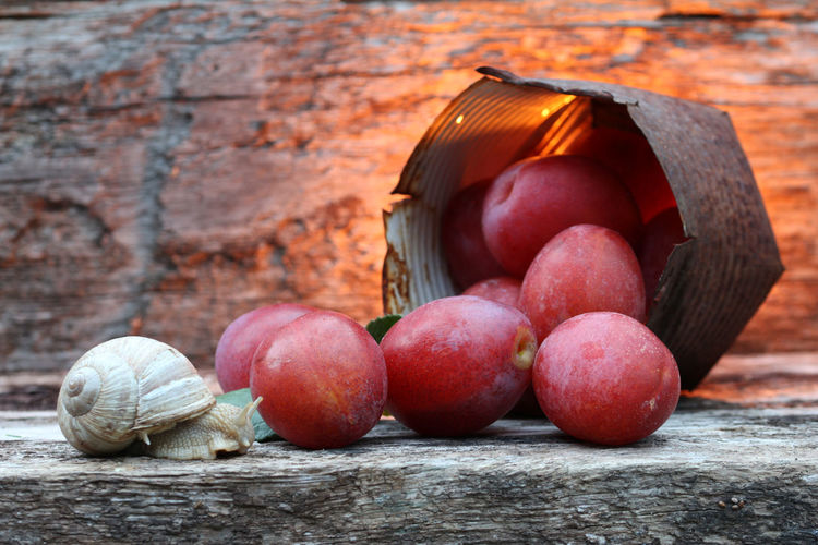 Antik Close-up Country Life Countryside Eggplums Eierpflaumen Flames & Fire Food Food And Drink Freshness Healthy Eating Plums Red Red Rustic Rustikal Schleimig Schleimige Schönheit Slow Life Slug Snail Still Life StillLifePhotography Weinbergschnecke Wooden Background