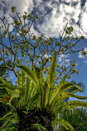 Low angle view of plants against cloudy sky
