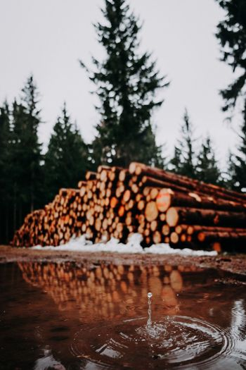 Silence in the woods Forestwalk Forest Trees Forest Photography Wood Waterdrop Waterdrops Tree Winter Nature Cold Temperature Snow Plant Food And Drink No People Large Group Of Objects Timber Firewood Wood - Material Abundance Stack Focus On Foreground Wood Freshness Forest Coniferous Tree