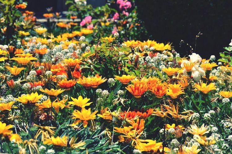 Flower Taking Photos Hello World Nature ??????