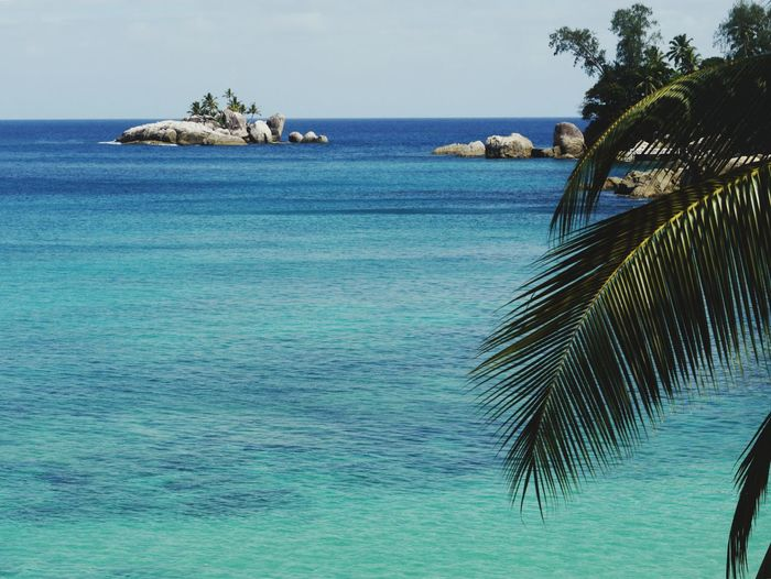 Tropical Paradise Turquoise Beach With A View Seychellen Seychelles Dream Vacation Blue Waters Little Isle Coconut Island Coconut Palm Tree Palm Fronds Palm Fronds Against The Light Palm Leaf Sea Palm Tree Nature Beauty In Nature Water Tranquility Scenics