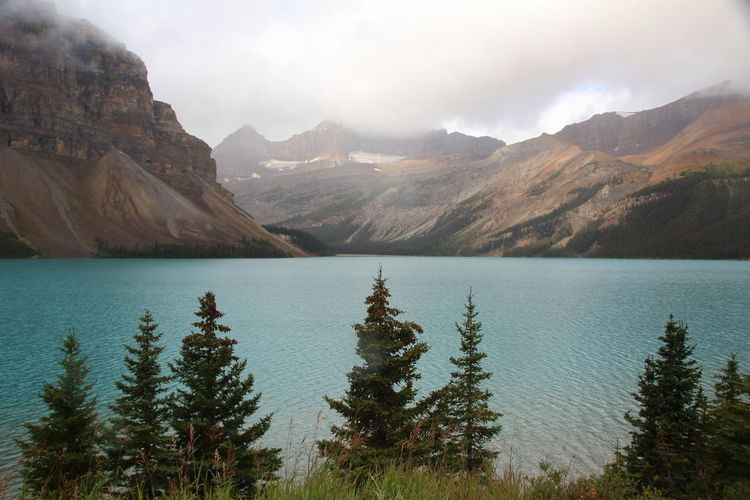 Bow Lake Mountain Water Beauty In Nature Lake Scenics - Nature Environment Mountain Range Nature Landscape Tranquil Scene Sky Tranquility Wilderness Plant Non-urban Scene No People Day Tree Cloud - Sky Outdoors Formation Coniferous Tree Mountain Peak