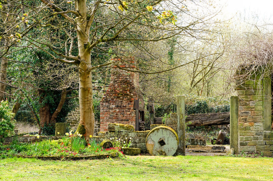 Old mill house Abandoned Architecture Autumn Beauty In Nature Day Grass Growth Mill Wheel Nature Old Mill  Outdoors Spring Tranquility Tree