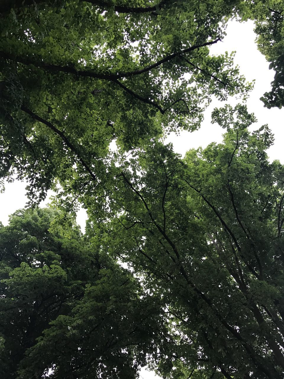 tree, low angle view, growth, nature, branch, beauty in nature, no people, green color, outdoors, day, tranquility, forest, sky