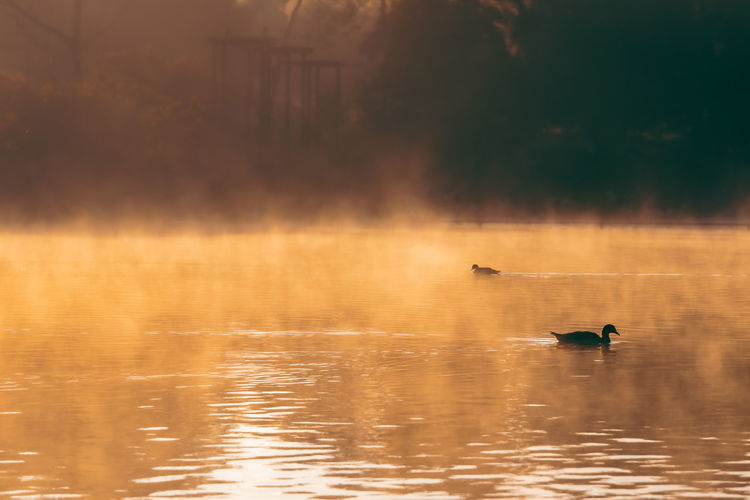 Early morning misty lake