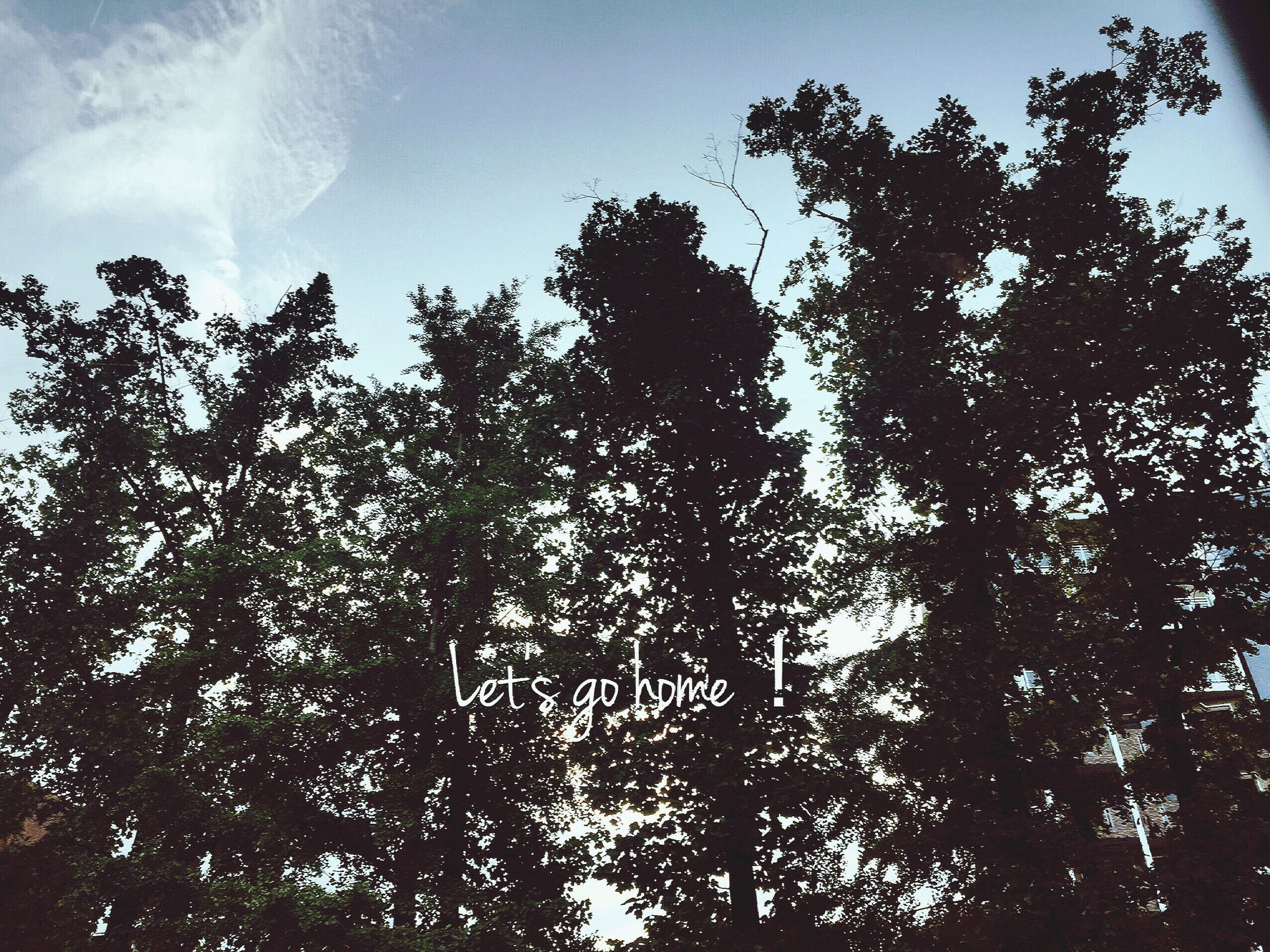 tree, growth, nature, low angle view, forest, no people, sky, outdoors, day, beauty in nature
