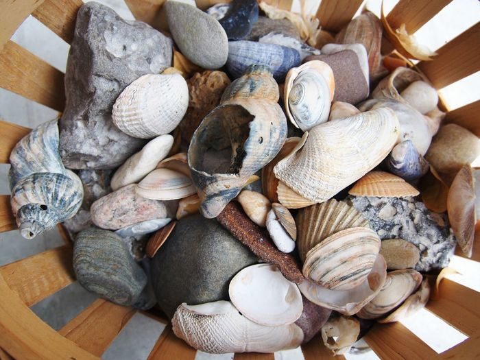 High Angle View Of Sea Shells In Basket