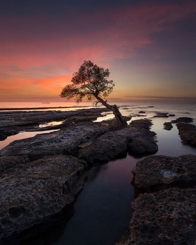 Lonely Tree Lonelytree Lonely Tree Longexpo Great Shot RedSky Longexposure Sunset Sea Beach Horizon Over Water Sky Landscape Sand Nature Water Beauty In Nature Cloud - Sky No People Low Tide EyeEm Ready