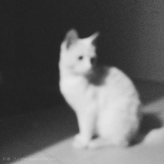 "cat named""little white"" Cat Mobilephotography"