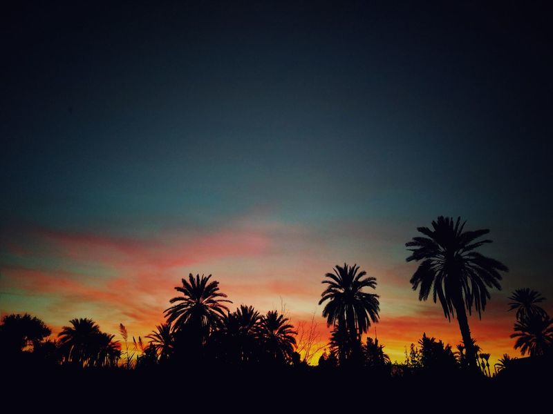 The beauty Beauty In Nature Low Angle View Palm Tree Tree Silhouette Sky Sunset No People Nature Outdoors Growth Scenics Tranquility Day Bycellphone