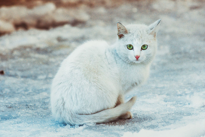 Portrait of cat on field during winter