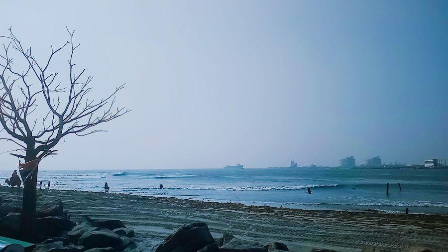 Tree Beach Sea