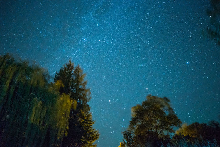 Starry Sky Over New Denver, BC Galaxy Astronomy Beauty In Nature Blue British Columbia Galaxy Growth Low Angle View Nature Night No People Outdoors Plant Scenics - Nature Sky Space Star Star - Space Star Field Tranquil Scene Tranquility Tree