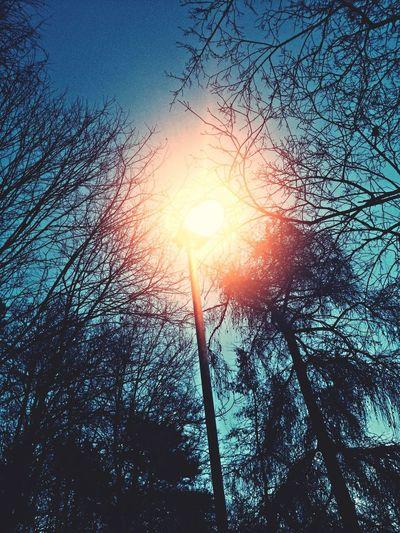 Světlo v parku v Litoměřicích Litoměřice Park Czech Lights