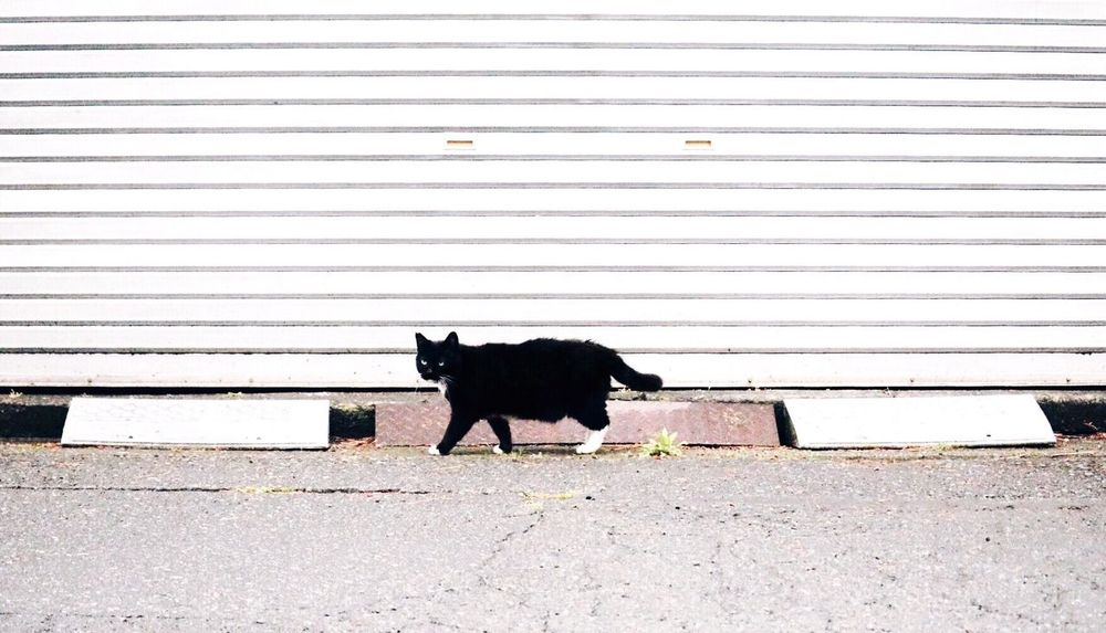 Cat Cat♡ Stray Cat Minimalistic Simplicity Cats Of EyeEm Cat Lovers EyeEm Animal Lover Animal Photography EyeEm Best Shots EyeEmBestPics
