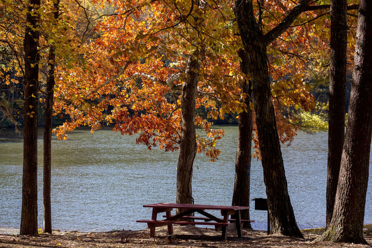 Bench at the Lake in the Fall Park Bench Outdoors No People Day Tranquil Scene Park Lake Change Autumn Trunk Nature Seat Tree Trunk Beauty In Nature Water