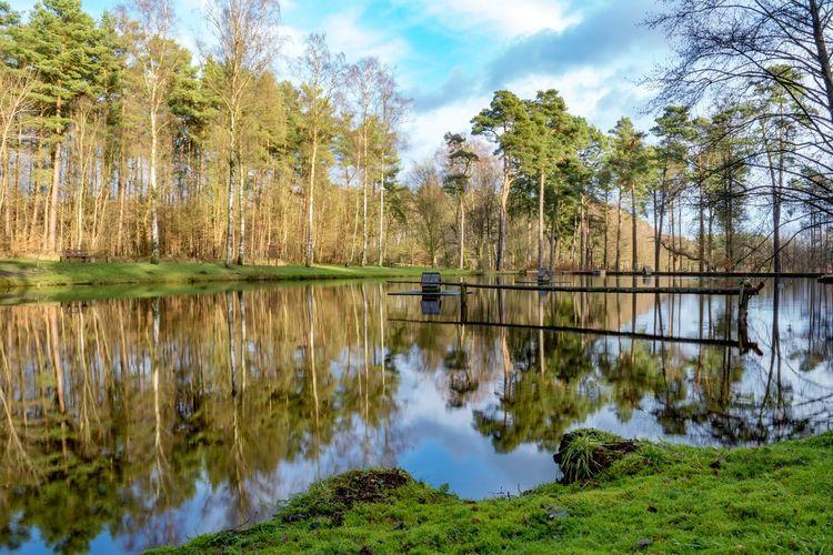 pond in
