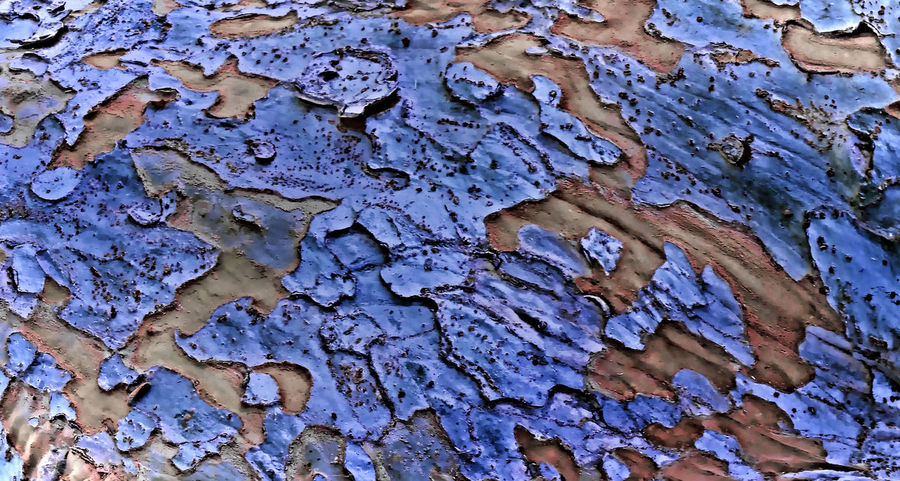 Abstract Bark Beauty In Nature Change Close-up Deterioration Geometry Nature Outdoors Pealing Rough Textured  Tree Worland WY Macro Beauty