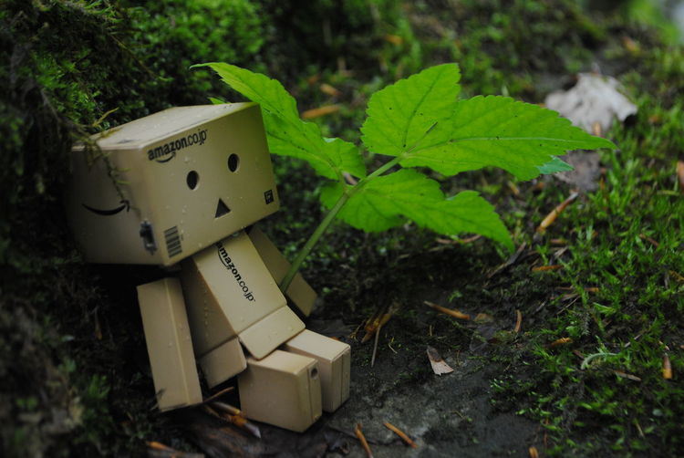 No People Plant Day Outdoors Leaf Nature Cardboard Box Close-up Macro Photography Jungle Woods Macro Danbo Danboard Danbophotography Amazon