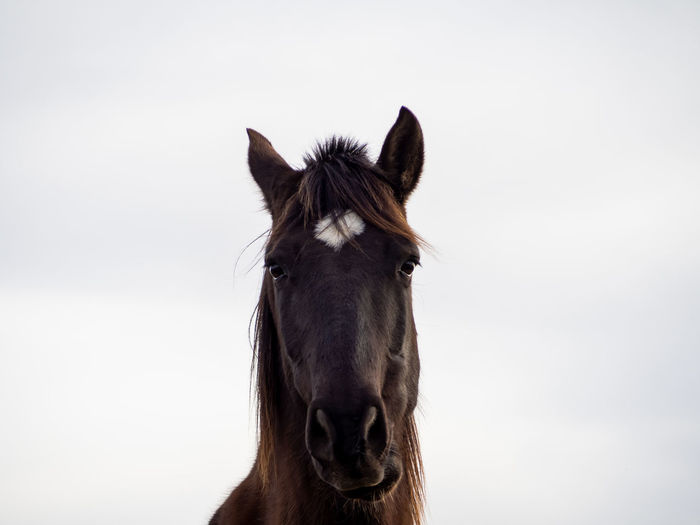 Isolated Equine Silhouette Horse Portrait Horse Silhouette Farm Farm Animal Black Horse Portrait Animal Portrait Domestic Horse Cattle Freedom Mare Purebred Spanish Horses Hack Stalion Biodiversity Farmland Farm Life Equine Photography Zoology Animal Mammal Animal Themes Domestic Animals Domestic Livestock Horse Pets One Animal Animal Body Part Animal Wildlife Vertebrate Working Animal Animal Head  No People Looking At Camera Brown Herbivorous Standing Animal Eye