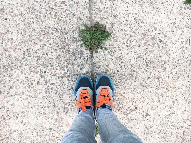 ноги фотоног Legs