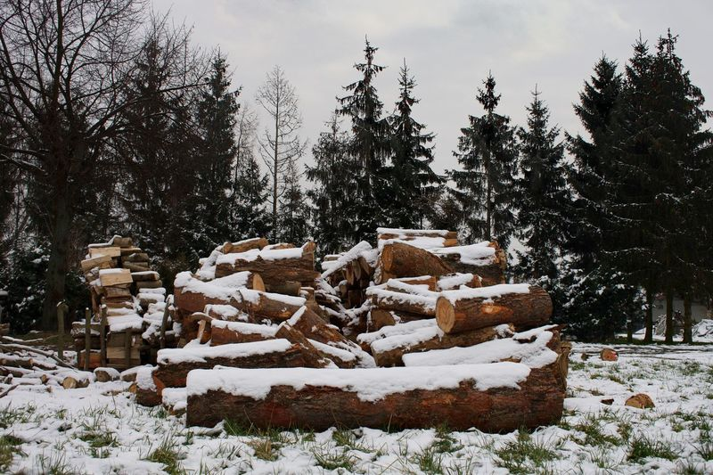 Firewood Logs Snow Winter Tree Cold Temperature Stack No People Nature Outdoors Timber