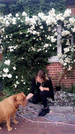 Waltraud Dog Animal Themes Outdoors Day Friendship