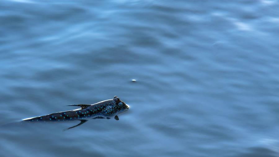 High angle view of lizard on sea