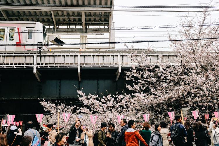 Nakameguro, Tokyo, 2017 Cherry Blossoms Everybodystreet Hanami Japan Sakura Streetphotography The Street Photographer - 2017 EyeEm Awards Tokyo