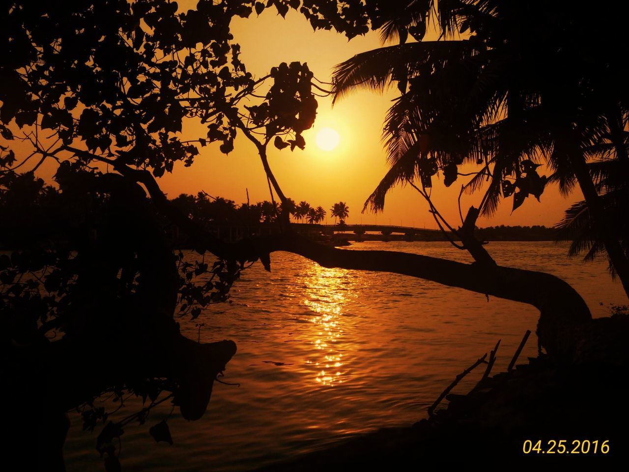 sunset, silhouette, tree, sun, beauty in nature, orange color, scenics, water, nature, reflection, sunlight, tranquil scene, outdoors, tranquility, sky, sea, no people, travel destinations, vacations