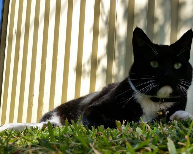 Zorro, my owner. First Eyeem Photo Pet Photography  Pets Cats