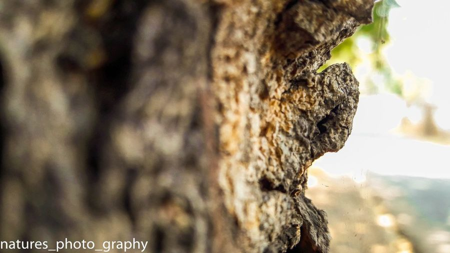 Tree Trunk Textured  Close-up Rough Selective Focus Tree Bark Beauty In Nature Growth Nature Growing Focus On Foreground Brown Rugged Outdoors Toughness No People Scenics Freshness Nature Trunkilicious