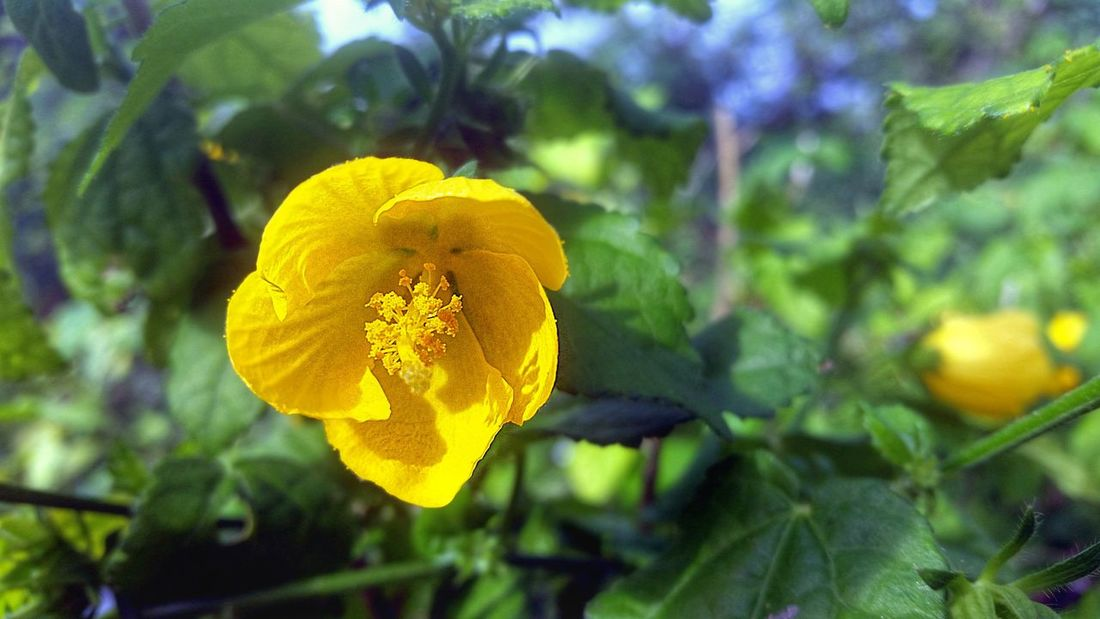 Close-up Wildflower Yellow Flower Nature Plant Outdoors Beauty In Nature Petal