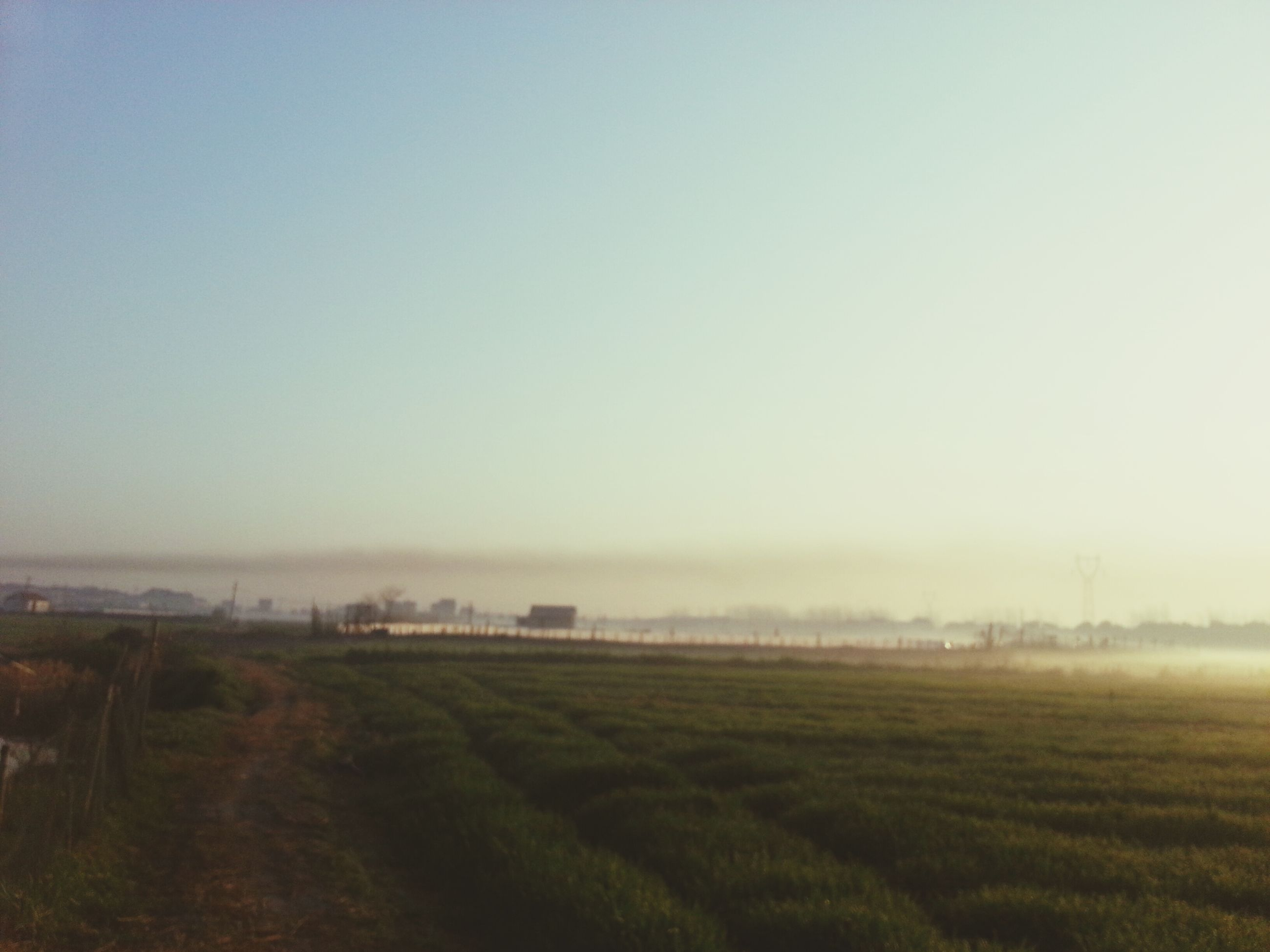 field, landscape, copy space, clear sky, tranquil scene, tranquility, grass, foggy, rural scene, nature, beauty in nature, scenics, weather, agriculture, grassy, farm, growth, tree, sky