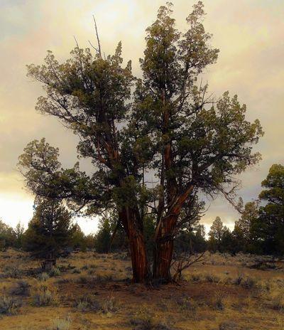 Badlands Day Desert Landscape Nature No People Oregon Outdoors Plants Trees