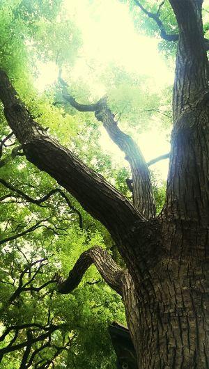 Basicmedia Hugging A Tree