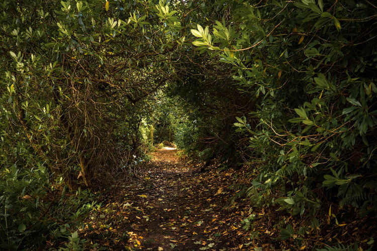 A mystic path at the isle of arran in scotland Autumn Autumn Collection Fairytale  Fairytales & Dreams Hiking Myth Path Roaming Scotland Beauty In Nature Forest Growth Leaf Nature No People Outdoors Secret Garden The Way Forward Trail Tree Walking