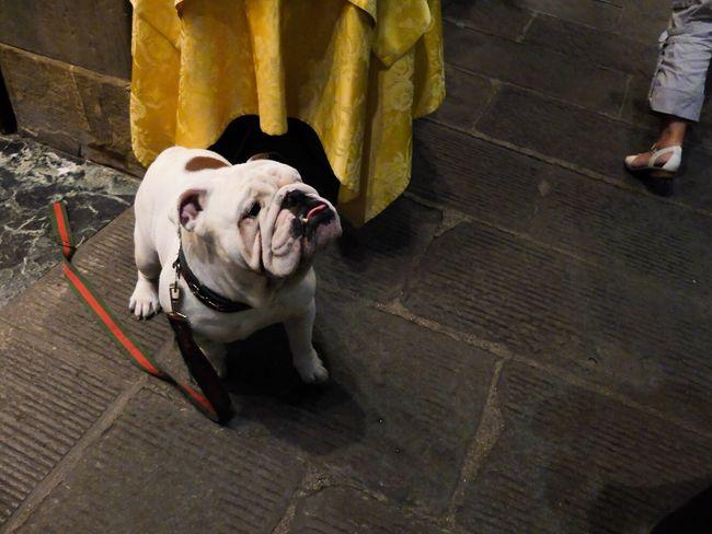 No biggie... Just a bulldog rocking a Gucci leash Dog RePicture Love The Moment - 2014 EyeEm Awards