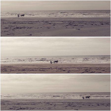 Donnalucata, febbraio. Sea Picoftheday Vintagefilter Frames Horses Lifestyles Winter Donnalucata Sicily Sicilia