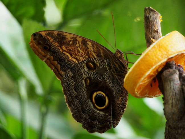 Animal Animal Body Part Animal Themes Animal Wildlife Animal Wing Animals In The Wild Beauty In Nature Butterfly Butterfly - Insect Close-up Day Flower Focus On Foreground Insect Invertebrate Nature No People One Animal Plant Pollination Tree Zoobudapest Zoology