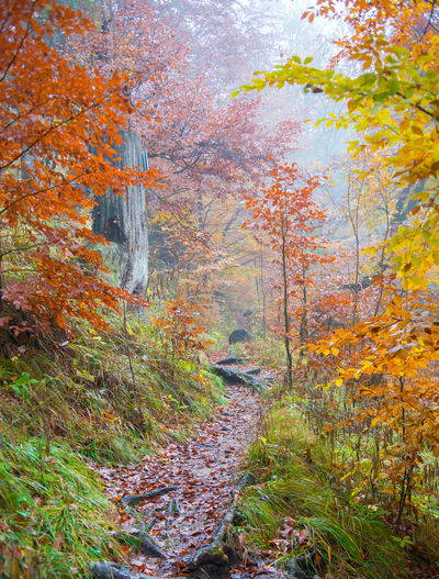 Autumn forest, Fussen, Germany Autumn Tree Plant Plant Part Forest Change Leaf Land Nature Landscape Scenics - Nature Beauty In Nature Environment WoodLand Tranquility Tranquil Scene No People Day Non-urban Scene Idyllic Outdoors Autumn Collection