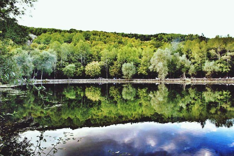 Reflection Lake Tree Nature Blacklake // Karagöl - Turkey