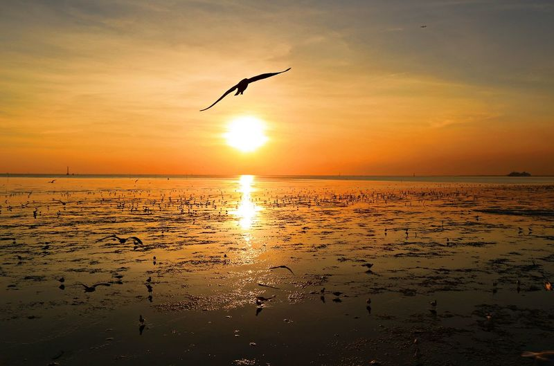 Freedom Nature