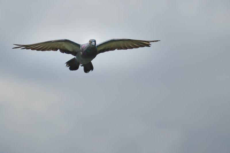 #fly Bird Bird