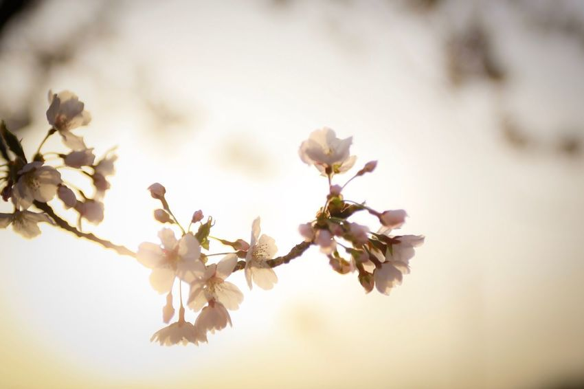 Flower Flowering Plant Plant Beauty In Nature Fragility Vulnerability  Freshness Growth Close-up Blossom Petal Tree Branch Flower Head Nature Inflorescence No People Springtime Focus On Foreground Twig