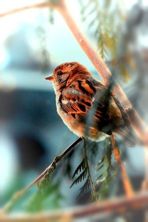 Sparrow bird watching! Animal Themes Animal Wildlife Animals In The Wild Baby Boy Bird Close-up Day Little Boy Nature No People One Animal Outdoors Perching Small Business Sparrow Tree