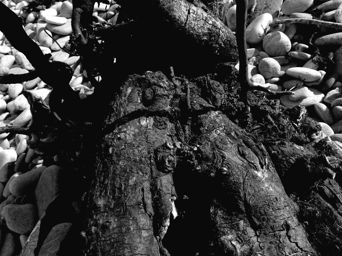 Driftwood close up Uk Scotland Eye Em Scotland Kingston Beach B/W Photography B/w Daily Black And White Photography B/w B/w Collection Black And White Walking Around Beach Photography Tree Stump No People Close-up Nature Outdoors Day Abstract Photography Driftwood Wood Backgrounds Beauty In Nature Beach Walks Full Frame