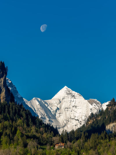 Wetterhorn Alps Beauty In Nature Blue Clear Sky Cold Temperature Day EyeEmNewHere Landscape Meiringen Moon Moon Mountain Mountain Range Nature No People Outdoors Scenics Sky Snow Snowcapped Mountain Switzerland Tranquil Scene Tranquility Tree Wetterhorn,