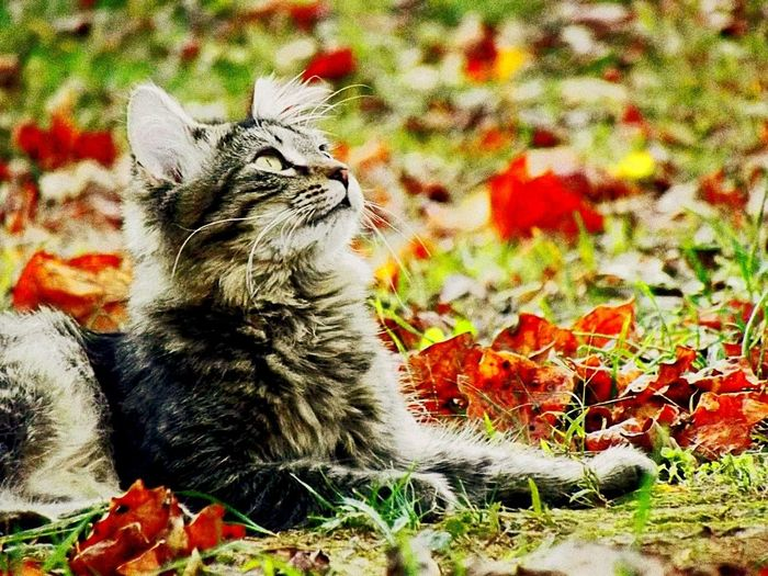Domestic Cat Pets Domestic Animals Feline Animal Themes No People Sitting Mammal One Animal Day Outdoors Nature Close-up Longhaired Cats